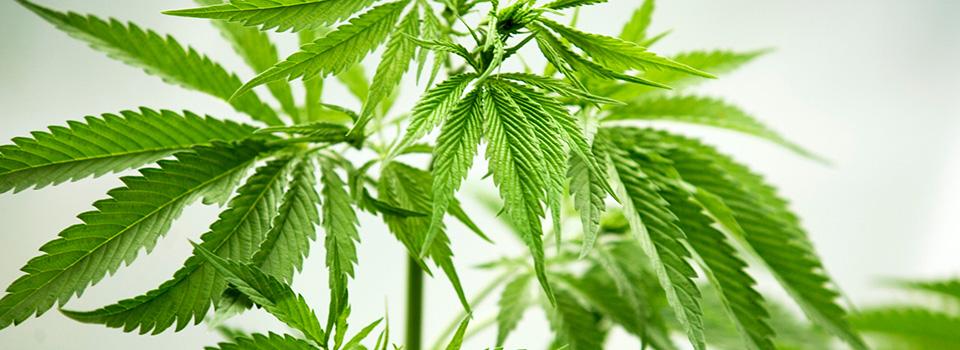 Cannabis Social Clubs Austria